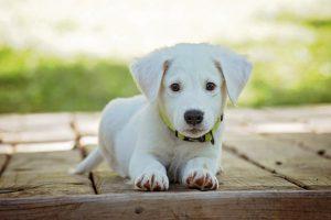 modna torba dla małego psa