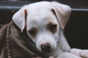 wytrzymała mata dla psa w podróży
